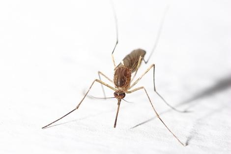 Some essential oils naturally deter mosquitos